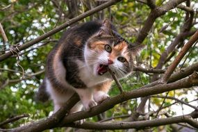 home cat gnaws a tree branch