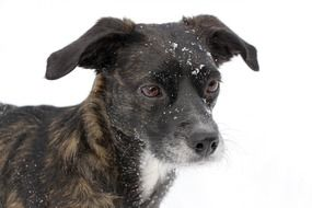 Dog with Snow on head