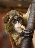 photo of the cute brown monkey