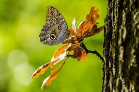 adorable and cute Tropical Brown butterfly