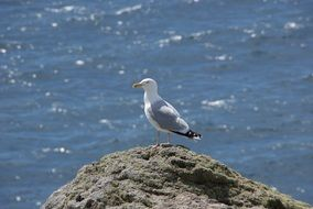 seagull on a rock on the background of water