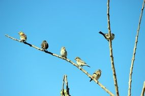 perched birds in spring