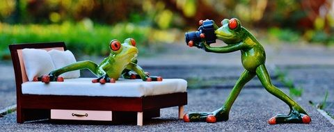 decoration photo shoot of toy frogs