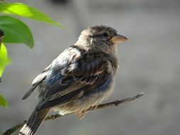 sparrow sitting on a dry branch