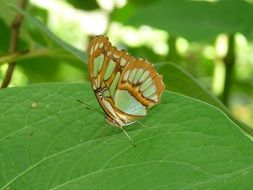 green butterfly on leaf