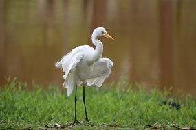 egret is a tropical bird