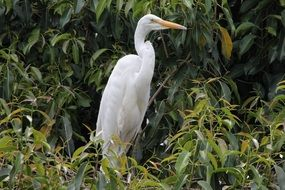 white crane in natural environment