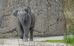 little elephant on a background of gray stone