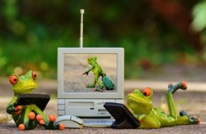 Frogs surfes in a internet