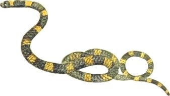 painted yellow and green snake