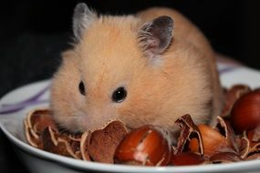 cute lovely Hamster