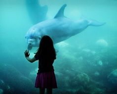 girl watching huge aquarium