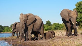 picture of the elephants in a national park in Africa