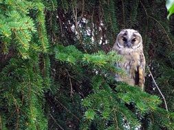 owl is sitting on a tree