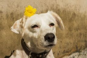 portrait of a white domestic dog