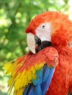 Colorful Parrot Ara Bird