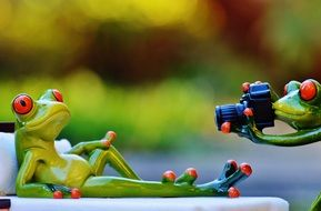 photo shoot of a relaxed frog