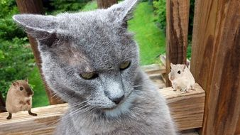gray cat next to mice