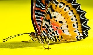 Bright butterfly on yellow surface