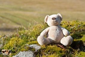 teddy bear on green moss