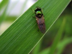 a fly sits on a green leaf