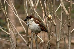 Sparrow bird sitting on branch