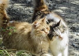 adorable and cute Cats