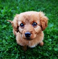 cute puppy with amazing eyes