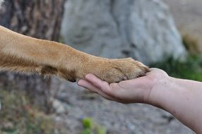 dog paw on man's hand