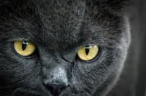 yellow Cat Eyes close up