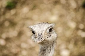 Emu Bird in Zoo funny portrait