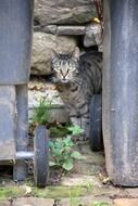 domestic cat near a stone wall