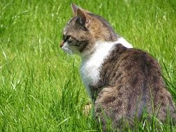 exceptional Cat in Grass