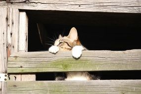 domestic cat in hiding place