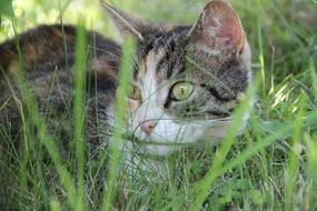 domestic cat hiding in grass