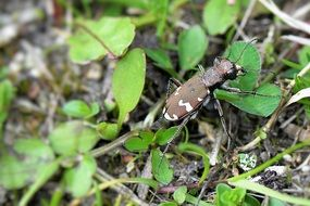 closeup of a camouflaged beetle