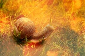 Snail Shell Animal Reptile