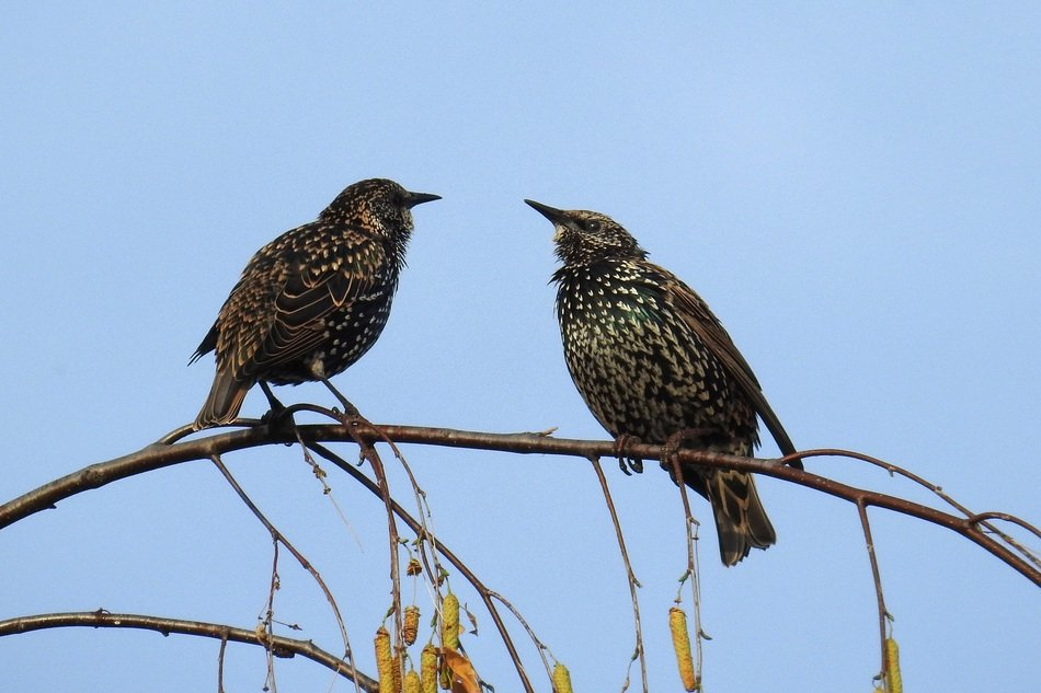 two perched songbirds