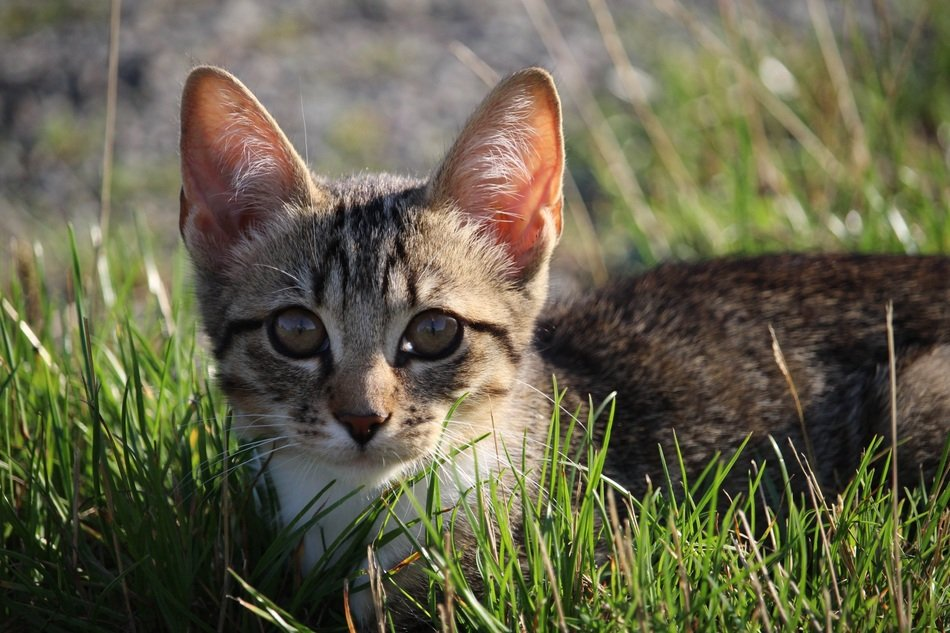 young cat in the green grass