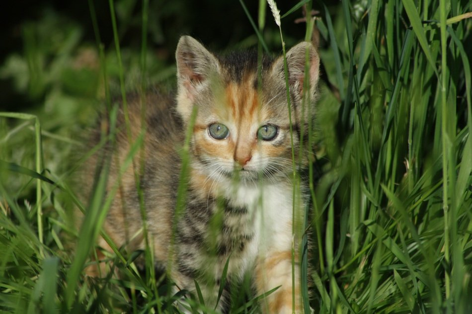 Small kitten in a grass