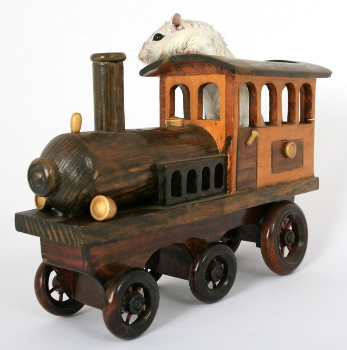 hamster in the toy loco