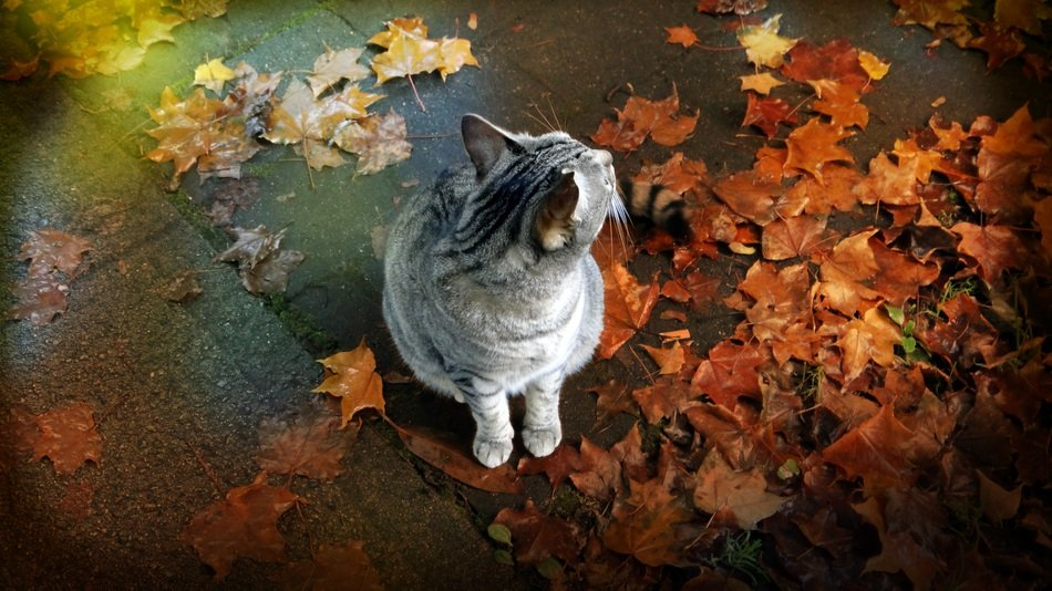 kitten sitting on the ground with autumn leaves