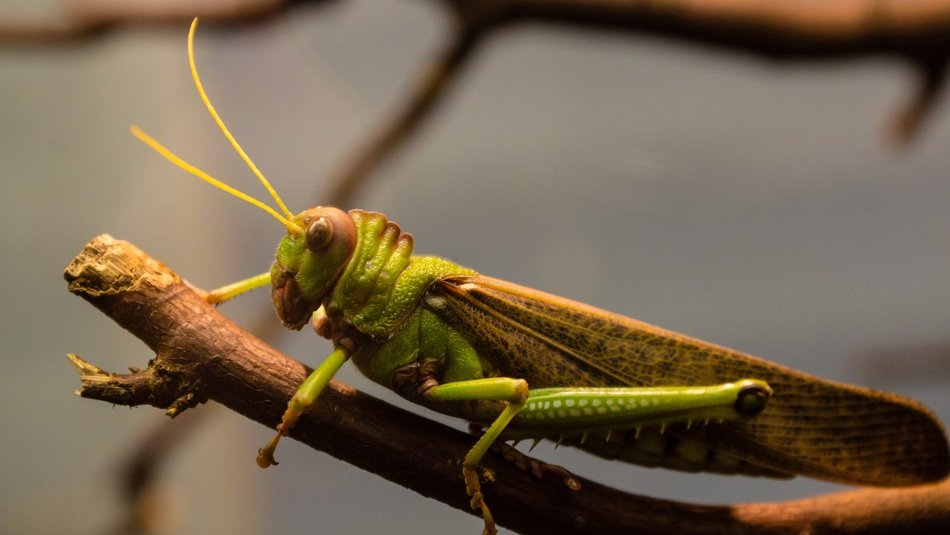 green grasshopper sitting on a branch