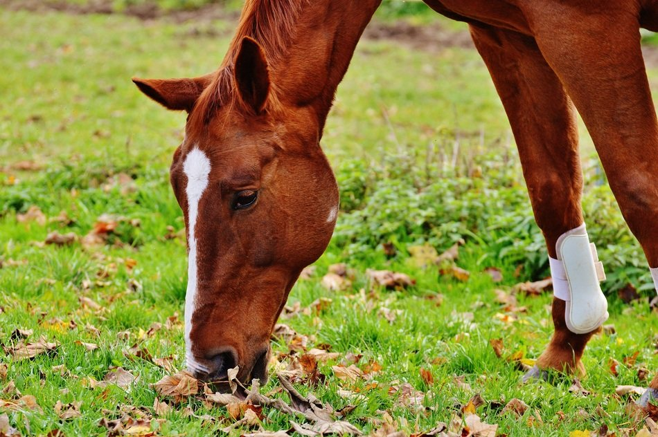 grazing horse in autumn