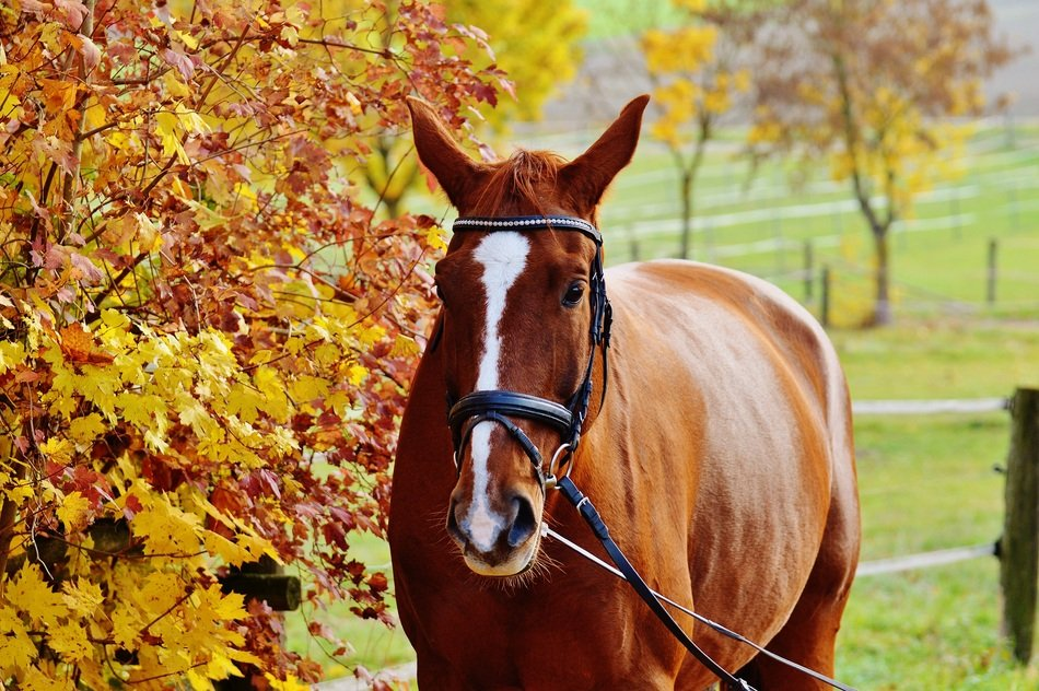 graceful horse on the autumn meadow