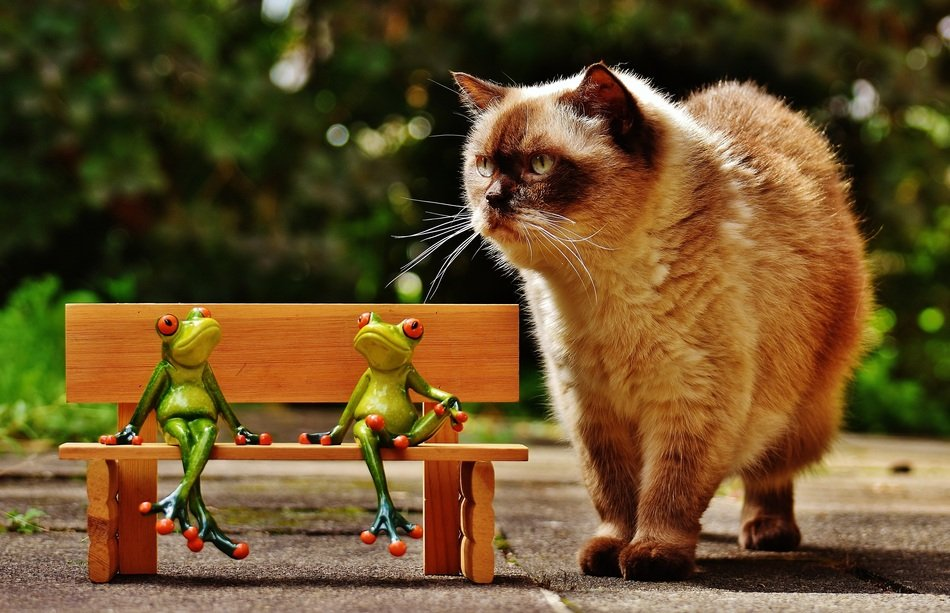 two ceramic frogs in the bench and domestic cat