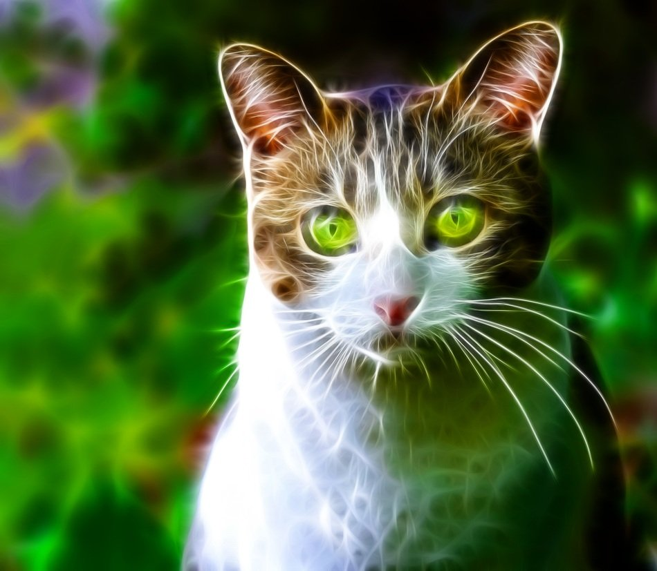 beatuful portrait of a cat