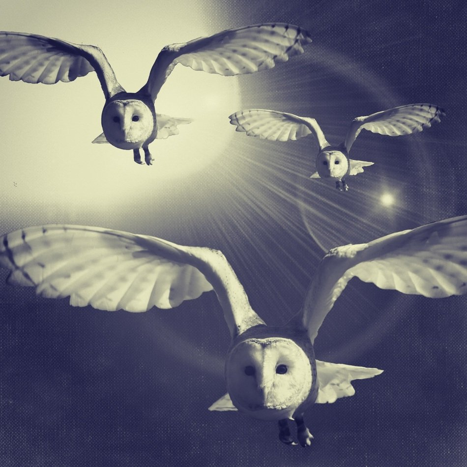 drawing of flying white owls