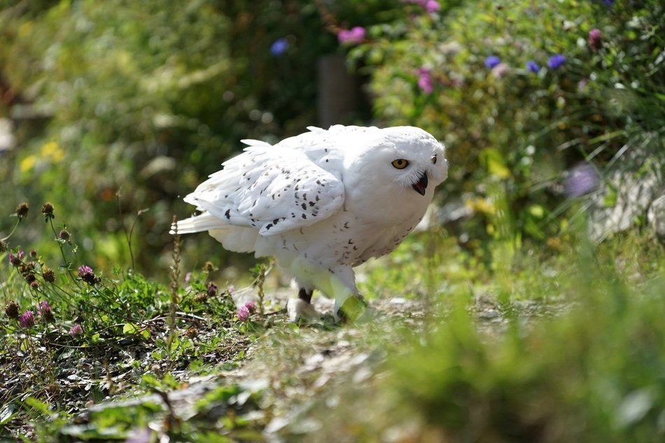 white owl on a sunny day among nature