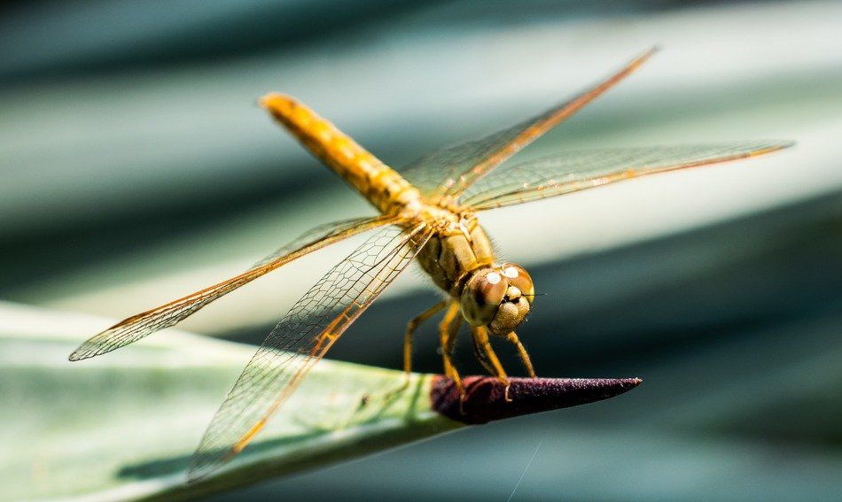 yellow dragonfly on the plant leaf